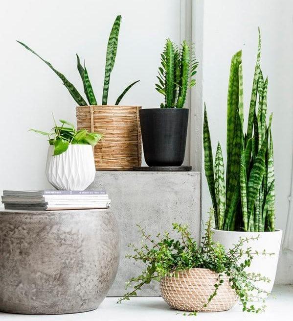 Nebojte se experimentovat s pokojovými rostlinami - ilustrační obrázek, zdroj