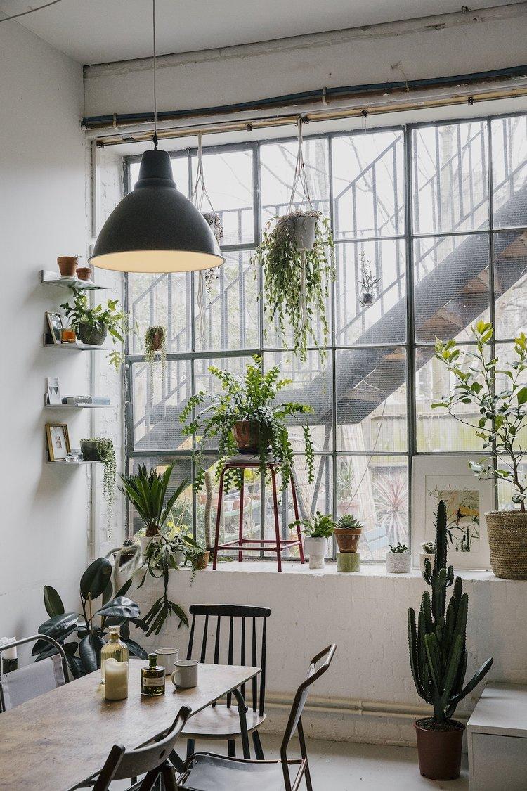 Záplava rostlin osvěží a zútulní váš interiér a navíc pročistí vzduch - ilustrační obrázek, zdroj