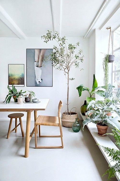 Urban jungle je životní styl - proto se hodí do jakéhokoliv typu interiéru - ilustrační obrázek, zdroj